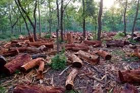 learning gateway  cause and effect essay  deforestationit is important to have trees planted on land because the roots of the trees anchor the soil down  this helps prevent soil erosion especially on rainy days