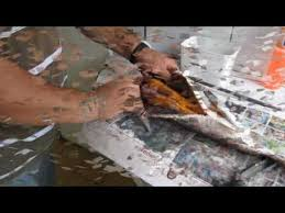 Resultado de imagem para receita de peixe ubarana