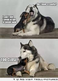 cute animal meme   Tumblr via Relatably.com