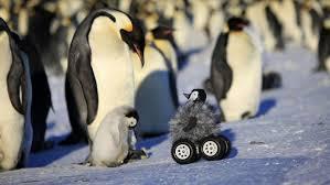 <b>Радиоуправляемая игрушка</b> помогает изучать Императорских ...