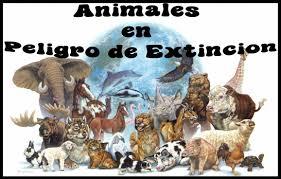 """PROYECTO """"ANIMALES EN PELIGRO DE EXTINCIÓN"""""""