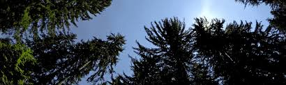 <b>May</b> the Forest Be With You: GEDI Moves Toward Launch to Space ...