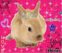 """Résultat de recherche d'images pour """"image mignonne de lapin"""""""
