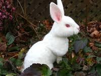 31 лучших изображений доски «Rabbit, Bunny, Alice in ...