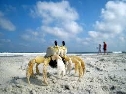 что взять с собой на пляжный отдых на пляже?