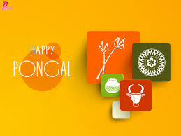 pongal festival beautiful collection best wishes happy pongal festival greetings and wishes card picture