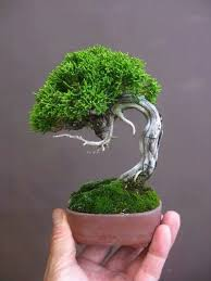 a tiny tree a bonsai tree that is check out our selection of bonsai add bonsai office interior