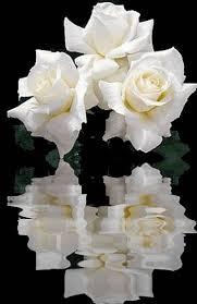Resultado de imagem para rosas e afeto gifs