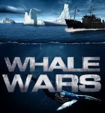 reality tv essay dominic s blog whale wars sea shepherd by sharkstudio jpg