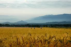 rwanda nziza a photo essay a year in kigali rwanda grain fields and morning mist in kinigi northern rwanda