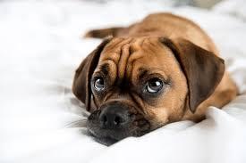 the dog s telltale tail animal behavio