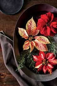 How to Care for Poinsettias All Year Long | Southern Living