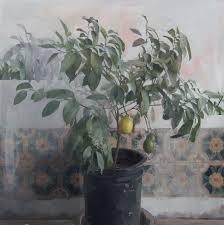 lemon tree x: zoey frank lemon tree oil on linen  x quot