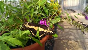 Image result for birmingham botanical gardens butterfly house