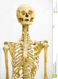 """Résultat de recherche d'images pour """"le squelette humain en photo"""""""
