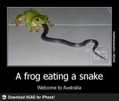 Australia on Pinterest | Meanwhile In Australia, Australia Funny ... via Relatably.com