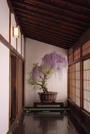 office bonsai exceptional wisteria bonsai bedroomglamorous granite top dining table unitebuys