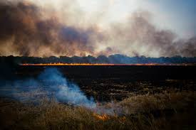 nashville photographer s dreamy snaps expose hidden truths in the reynolds photographs tell stories including this scene of a charred field burning east of