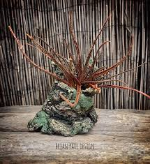Aloe Belatula in a pot by Brian Paul Design. | Paul design, House ...