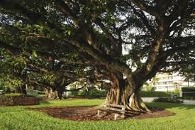 Image result for species of oaks