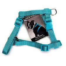 <b>Dog Harness</b> Vs. <b>Collar</b>: Which is Better?