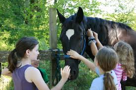 finding a great horse camp tips and horse camps in greater horses 101 should be part of camp