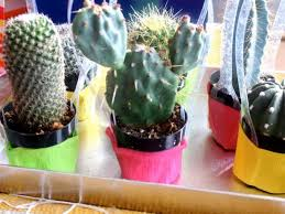 How To Make Mini <b>Cactus Party Favors</b> | how-tos | DIY