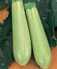 Интернет ... - Купить профессиональные семена кабачка оптом