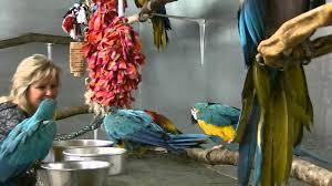 zazu s house parrot sanctuary zazu s house parrot sanctuary