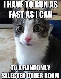 25 Funny Cat Memes: Part 2 - CatTime via Relatably.com