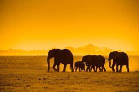 elephant leaders lead by example professional services leadership i recently introduced elephant matriarchs as a good example of natural leaders