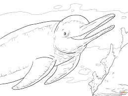Small Picture Amazon River Dolphin Boto coloring page Free Printable Coloring