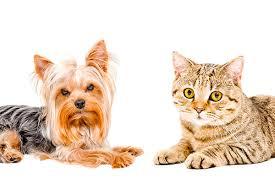 ТОП-10 лучших <b>машинок для стрижки</b> кошек и других животных ...