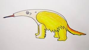 Image result for aardvark drawing