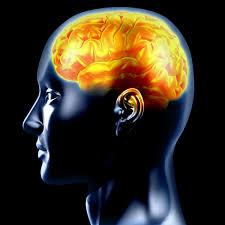 Resultado de imagen para lenguaje y cerebro