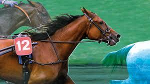 """Résultat de recherche d'images pour """"image chevaux pmu"""""""
