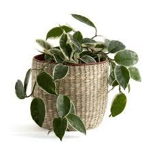 <b>Кашпо</b> из гербария, mila натуральный <b>La Redoute</b> Interieurs   La ...