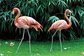 Video Studio <b>Yeele</b> 10x8ft Flamingo Photography Background ...