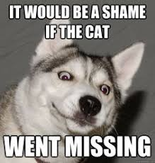 Kimber on Pinterest | Husky, Siberian Huskies and Husky Meme via Relatably.com
