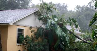 Image result for hurricane matthew tree damage gif