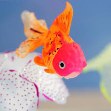 <b>Fish</b> & <b>Aquariums</b>