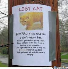 RMX] Unusual Lost Cat Sign by findout137 - Meme Center via Relatably.com