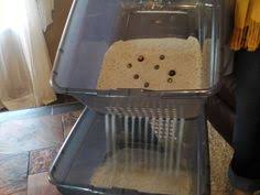 scoop free no mess money saving side sift cat litter box arena kitty litter box