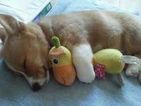 2666 Best Puppy love images in 2020 | <b>Cute dogs</b>, Cute animals ...