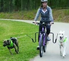 Ποδήλατο με δύο σκύλους...