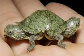 Image result for tortoise'head cut