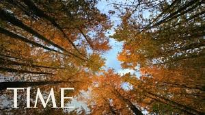 Autumn Equinox 2017: Why Friday Is The First Day Of Fall In The ...