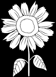 Image result for black and white sunflowers