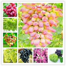 Promotion! <b>New Arrival</b>! <b>50 Pcs</b> Mini Carnations Bonsai Balcony ...