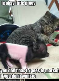 cat-petting-baby-pig-cute-adorable-meme.jpg via Relatably.com